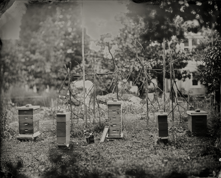 tintypes of five bee hives in philly